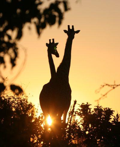Golden Africa Safaris - Okavango Delta (2)