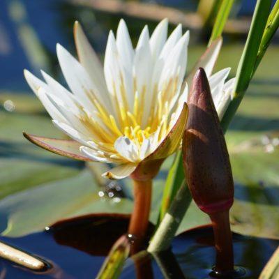 Golden Africa Safaris - Okavango Delta (6) (1) (1)